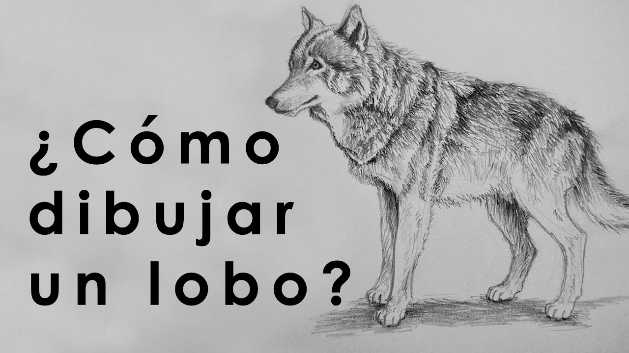 TUTORIAL  Cmo dibujar un lobo Con Lpiz  YouTube