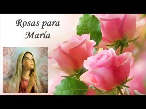 Rosas Para Maria Frases Sobre La Virgen Maria Youtube