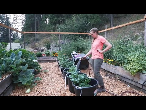 timelapse:-start-to-finish-raised-bed-garden-build