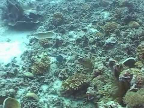Redang Island Diving film 2012 Malaysia