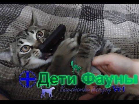 Фурминатор для кошек видео как пользоваться