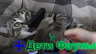 видео Какой шампунь лучше выбрать для кошки?