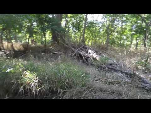 Chasing Bigfoot! Seg.2 Oklahoma Jungle and Bigfoot Creek!