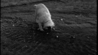 Video Guy Maddin - Spanky: To the Pier and Back download MP3, 3GP, MP4, WEBM, AVI, FLV Januari 2018