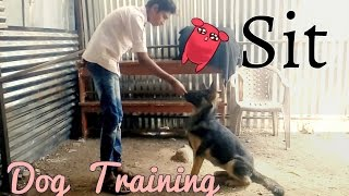 How to teach a dog to sit (Hindi). Dog training in Hindi.