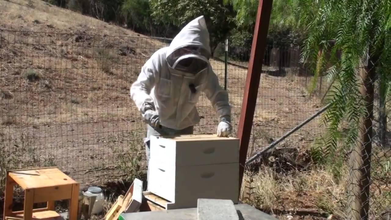 Bees: Powdered Sugar Mite Treatment 1 of 2