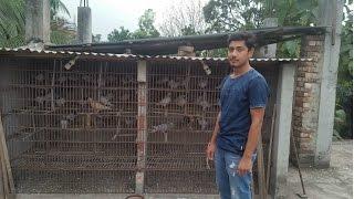 Imran Pigeon Loft Uttara Dhaka