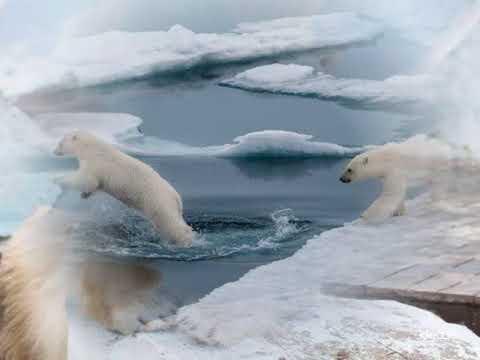 колыбельная белые медведи(умка)