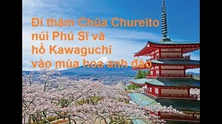 Đi thăm Chùa Chureito, núi Phú Sĩ và hồ Kawaguchi vào mùa hoa anh đào