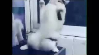 Хит... The cat decided to show how to dance...