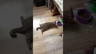 Лентяи и Бездельники.Смешные коты приколы  –  Funny Cats