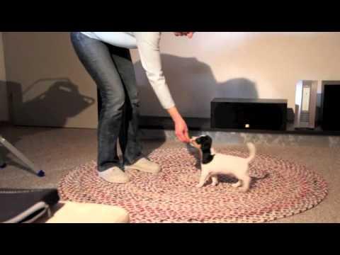 Jack Russell - TurboJacks - Erstes Training mit den Mini-Turbos