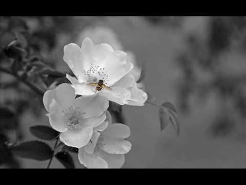 Sad Ukulele Song - Bees (Original Composition)