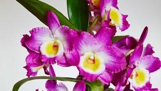 Recuperar Orquídeas Terrestres