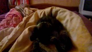 Котёнок после ванны, няшка, ми-ми-миш-ная ))