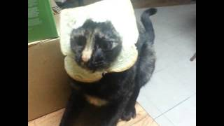 funny kitten videos