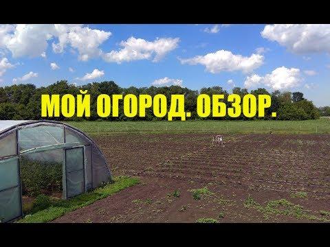 Что выгоднее выращивать в огороде?