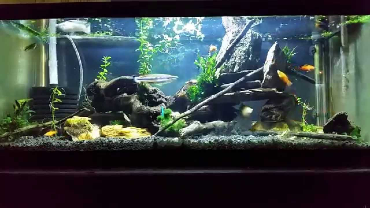 Here 39 S A Look At My Brackish Tank Figure 8 Puffer Gobies