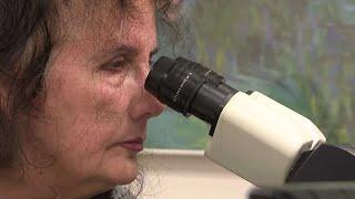מחקר ישראלי מצא: המולקולה שמנצחת את סרטן הלבלב