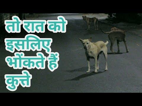 जानिए रात को कुत्तों के रोने के पीछे छुपा है वैज्ञानिक कारण To Is Vajhe Rat Ko Kutte Bhokte Hen