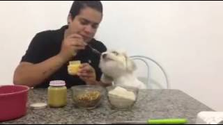 receita de biscoitos para cachorro
