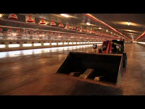 Gamber Poultry Cleaning