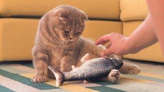 고양이에게-생선을-맡겨봤어요