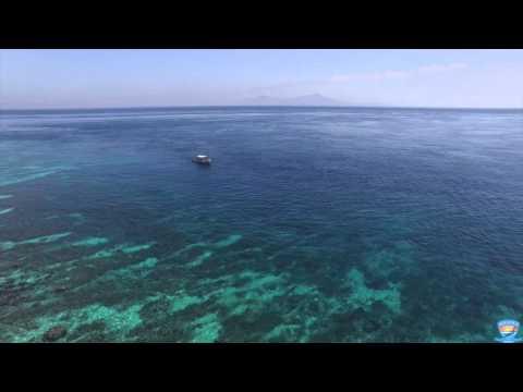Aquatica Dive Resort - Dolphins of Timor Leste (East Timor)