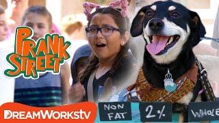Milking a Dog Prank | PRANK STREET
