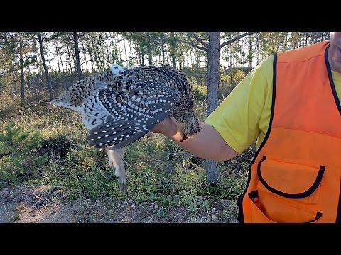 Prairie Chicken Hunt In Manitoba