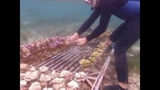 Cultured Coral Farm Care