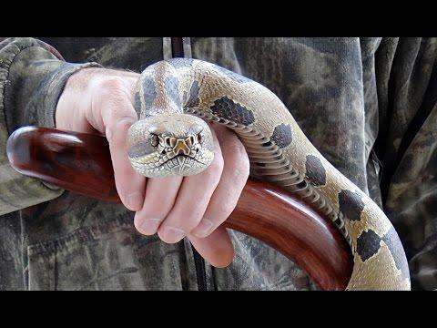 Wood Carved Timber Rattlesnake Walking Cane #59