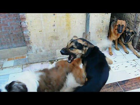 عملنا تجربه وقررنا نتعامل مع الكلاب بالحب والحنيه وهكذا كان رد الفعل ' كابتن ابونور ' شخصيتك هى نجاح