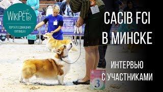 Выставка собак 2017 - осенний CACIB в Минске.