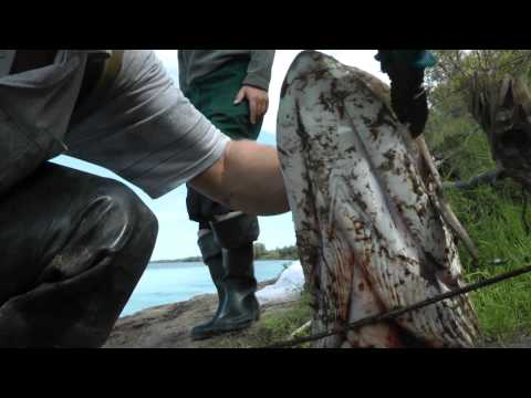 Охота на щуку . Fishing on the spoon-bait. m2t