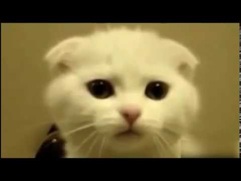cats funny .قطط ترقص وتغني. cat and dog dancing and singing, best funn, animal,