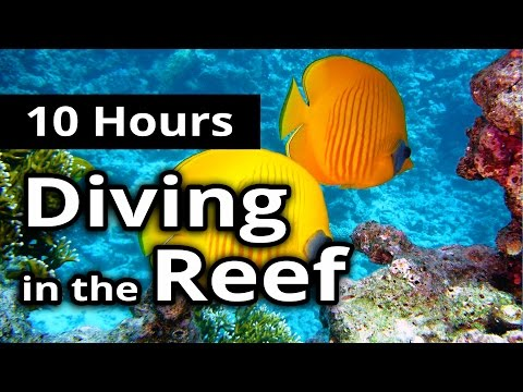 ASMR: UNDERWATER Sounds - DIVING in the REEF - 10 Hours - Relaxation / Sleep / Meditation