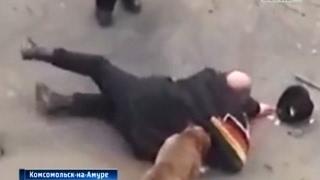 Вести-Хабаровск. Нападение собак на беременную женщину в Комсомольске-на-Амуре