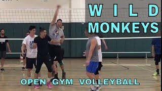 WILD MONKEYS - Open Gym Volleyball Highlights (5-11-17)