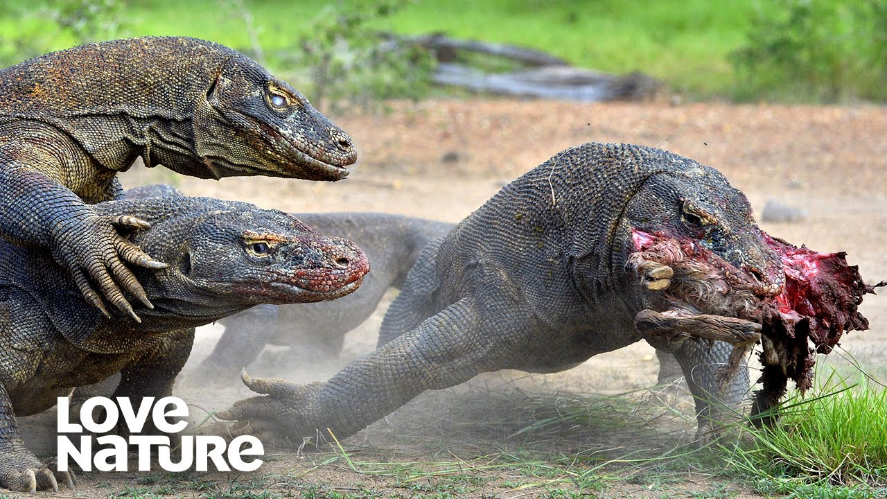 World's Deadliest Monster Lizards