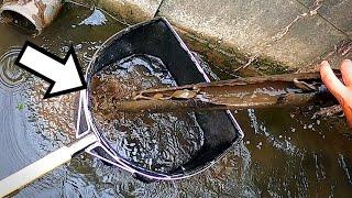 水路に沈んだ竹の中から美しい生物が!ノーカットガサガサ