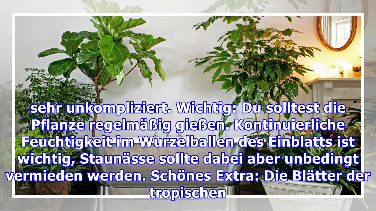 Pflanzen fürs Badezimmer: Diese eignen sich besonders gut
