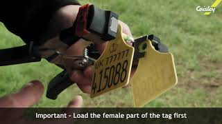 Caisley BVD Tags