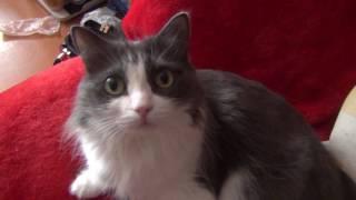 Кошки проказничают завалили стул Кошки Маляша и Серафима