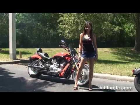 Used 2004 Harley Davidson V-Rod Black Motorcycles for sale - Ocala, FL