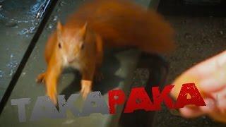 TakaPaka dokarmia wiewiórki