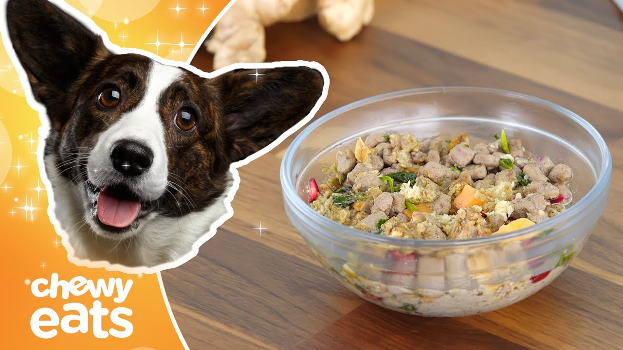 DIY Dog Food: Turkey and Ginger Power Bowl | Chewy Eats