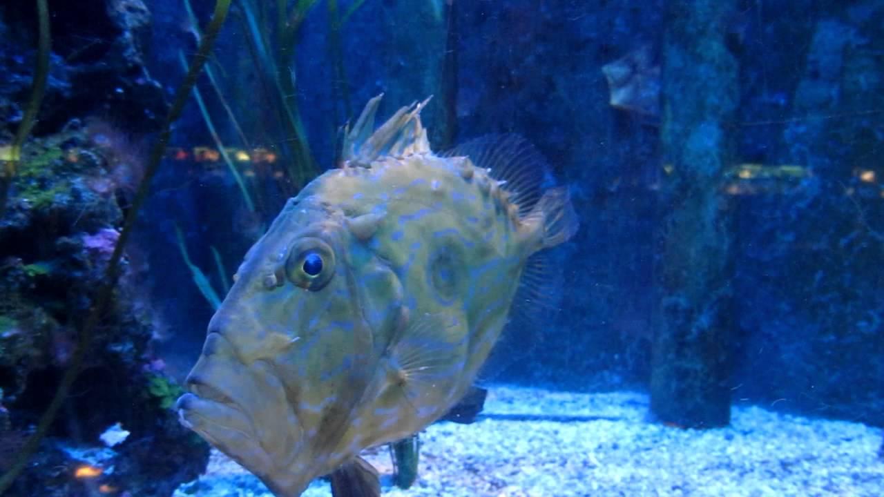 Monaco oceanographic museum aquarium mediterranean john for Picture of dory fish