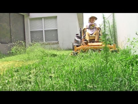 Lawn care vlog #23 Small yard with tall grass & weeds