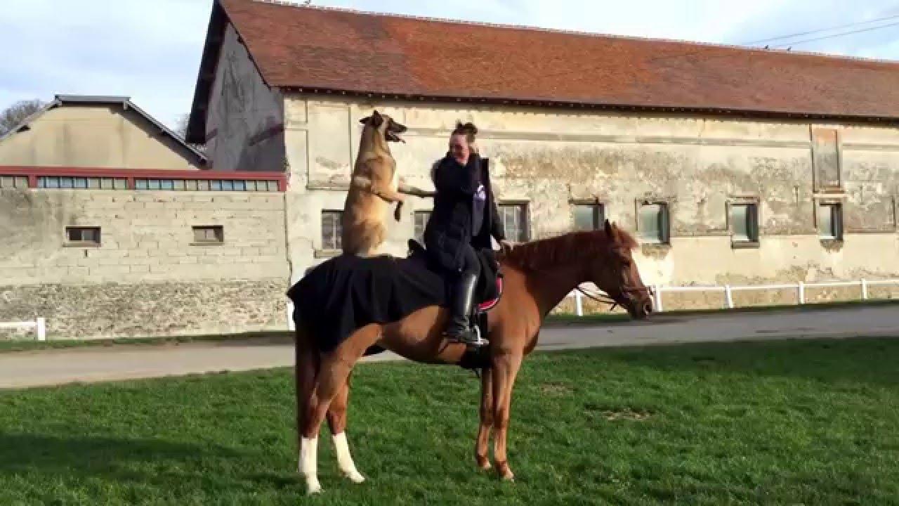Ixo qui apprend faire du cheval sur quernel avec des - Cheval rigolo ...